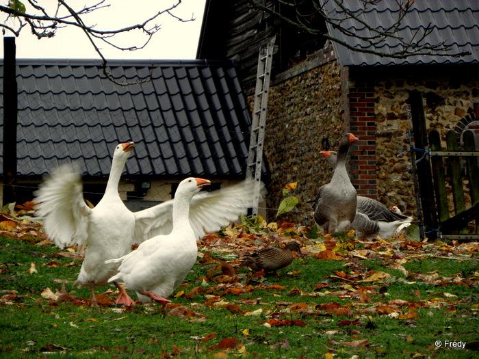 Les étangs de Damville et Le Sacq 20101108_004