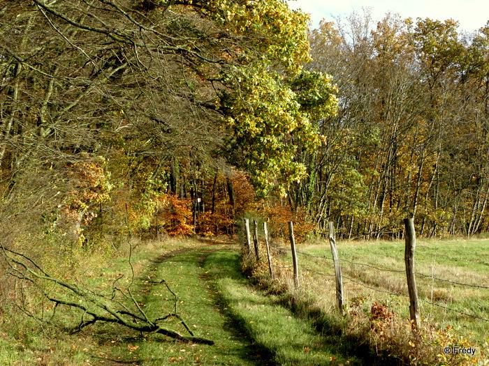 Les étangs de Damville et Le Sacq 20101108_014