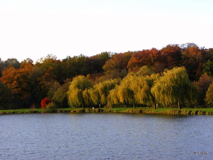 Les étangs de Damville et Le Sacq 20101108_021