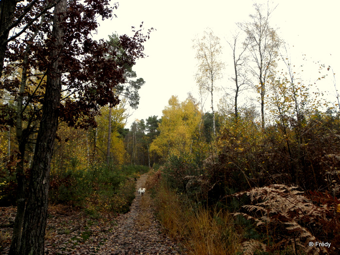 Gaudreville La Rivière, circuit du Sec Iton 20101115_009