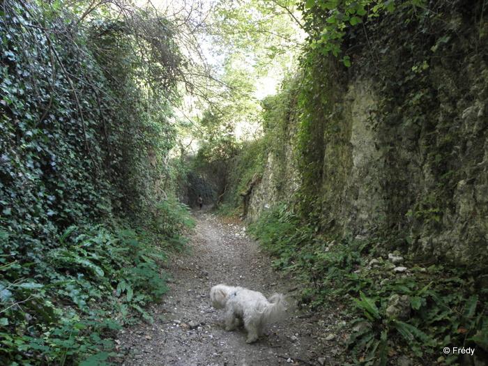 Les Andelys et Le Thuit 20120915_023