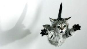 ¿Deben adquirir los animales derechos casi semejantes al de los humanos? Gato-volador1-300x168