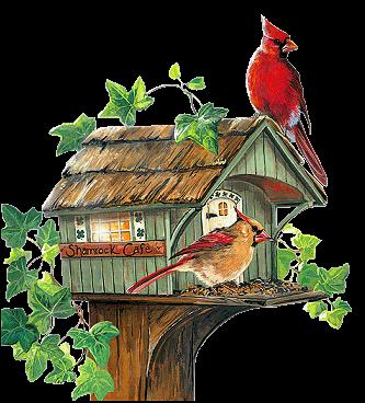 Les oiseaux - Page 2 00hq8won
