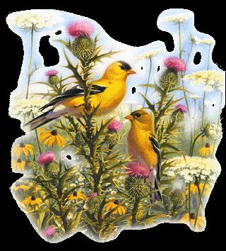 Les oiseaux - Page 2 0hfmewyd