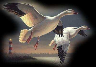 Les oiseaux E54ij1p1