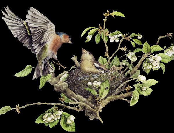 Les oiseaux - Page 2 E8fp1pkc