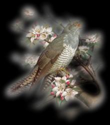 Les oiseaux - Page 2 F95fmn3g