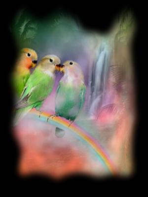 Les oiseaux - Page 2 Kiunlyw5