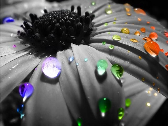 Avatars Fleurs K1mx3a1b
