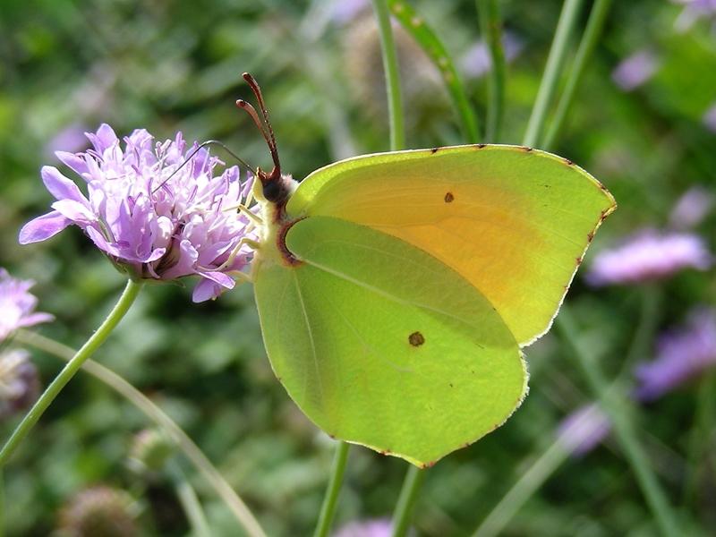 Quel papillon êtes-vous ? Image001