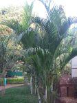 Наши опять в Индии (фото с поездки) Thumbs_IMGP0012_sml
