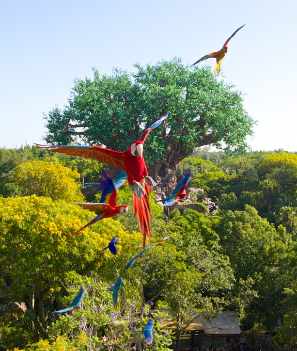[Disney's Animal Kingdom] Nouveaux divertissements nocturnes: Rivers of Light, Tree of life Awakenings, The Jungle Book Alive with Magic ... - Page 3 WLW84957946-613x724