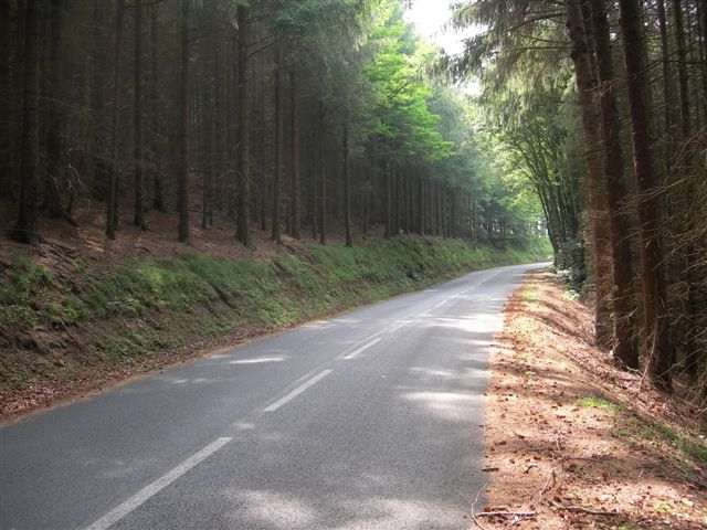 The Walking Dead  038_route_foret