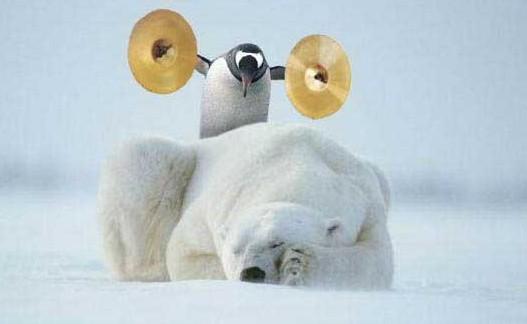 En suspend - Page 5 Pingoin-sur-ours-polaire