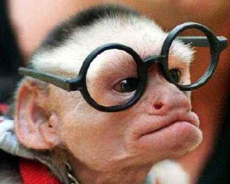 Pics engraçadas. - Página 2 Macaco