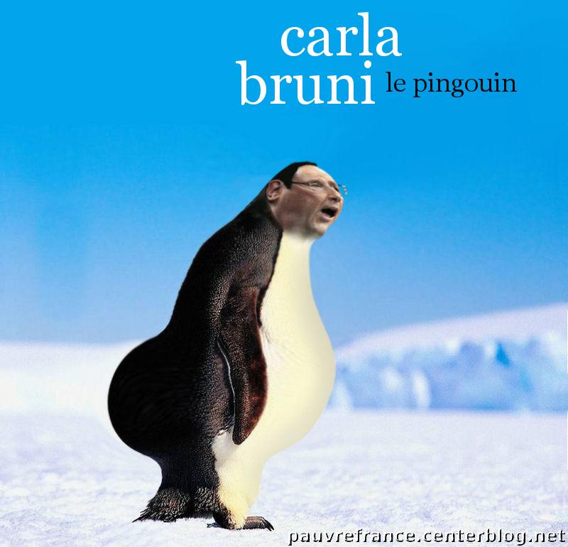 Du bric et du brac - Page 37 CD-Cover-carla-Bruni-le-Pingouin1