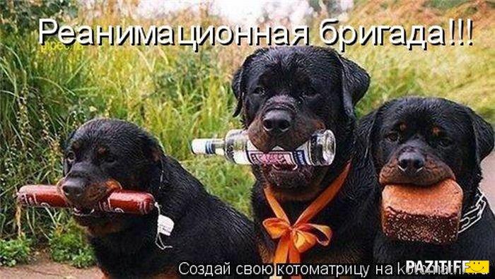 ВОСТОЧНО-ЕВРОПЕЙСКАЯ ОВЧАРКА ВЕОЛАР ВЭНДИ-ЛАР 1312117629_kotomatrix_06