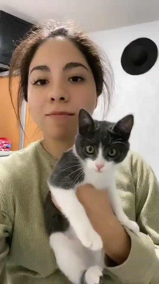 "貓:""嚇死我了!"" I9ui8J3QCsh9TxW4"