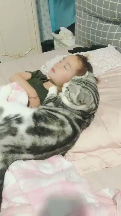 貓抱枕 AVYA4OTwxZ0SVuEo