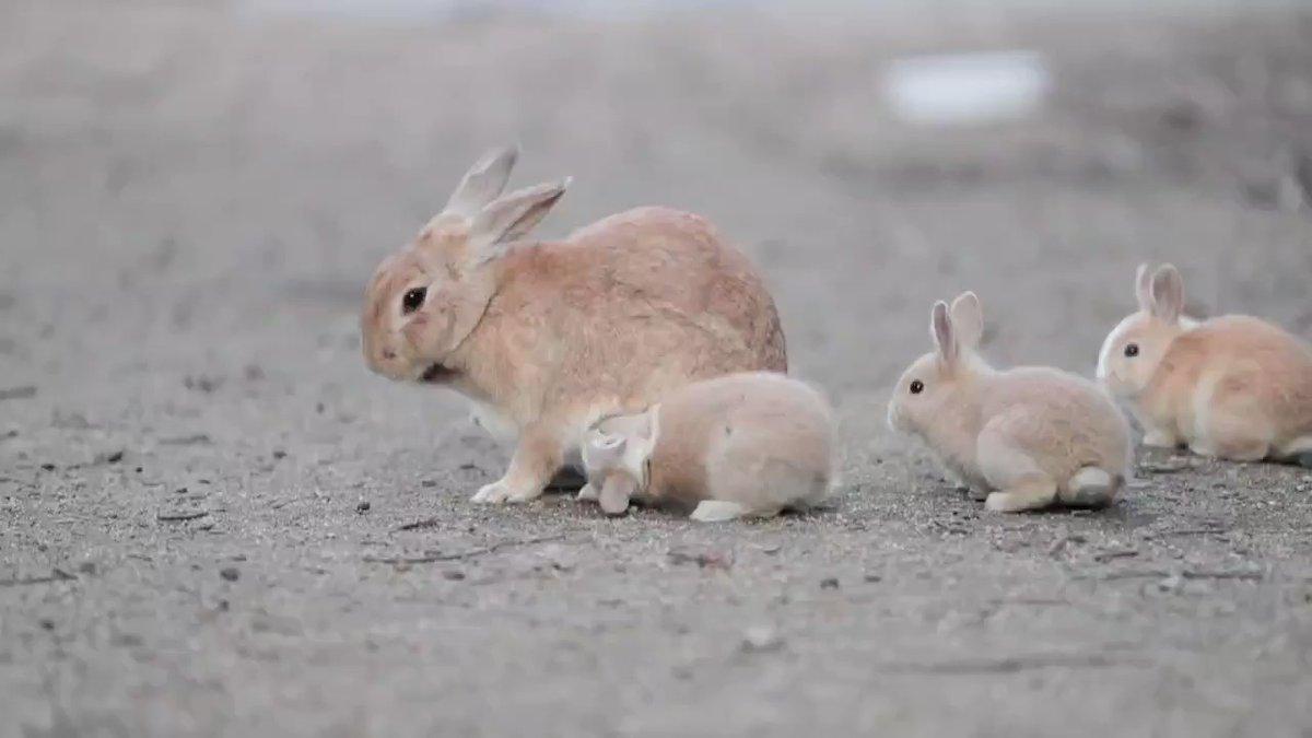跟著兔媽媽走 2GvlGWFT2v1-izwk