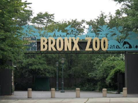 Bronx Zoo Bronx_zoo-001_914863_31211