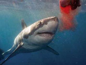 À l'aide !!! Que me conseillez-vous ? - Page 3 Shark-blood