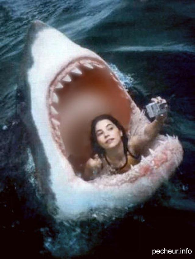 [Jeu] Association d'images - Page 11 Selfie-requin