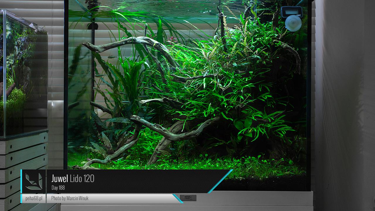Juwel Lido 120 - Nouveau départ Juwel-Lido-120-Day-188