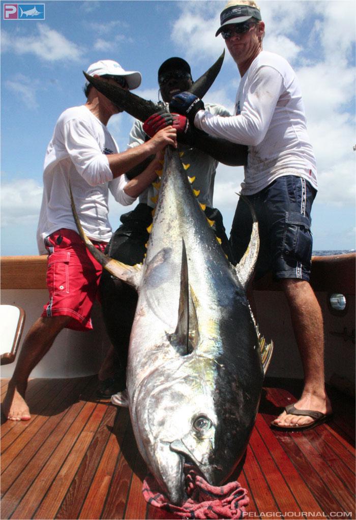 La Pesca del Atún Aleta Amarilla por José Manuel López Pinto / Actualizado al 16/05/12 Asc-tuna-101