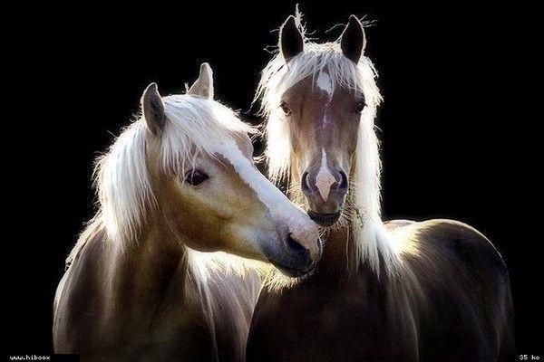 les chevaux.. F34bf363