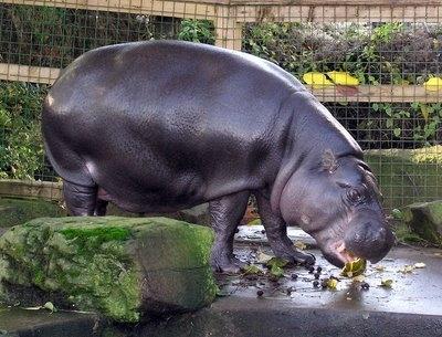 Top animales raros y casi extintos 4522002549