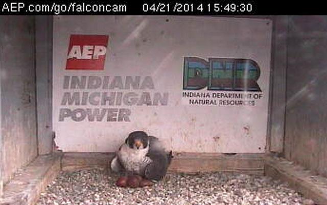 Indiana/Fort Wayne,I-AEP: Jamie(92/D) en Moxie(99/E) 2014 - Pagina 3 1-Przechwytywaniewtrybiepenoekranowym2014-04-21214603