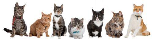 Battle No 20 Cat-breeds