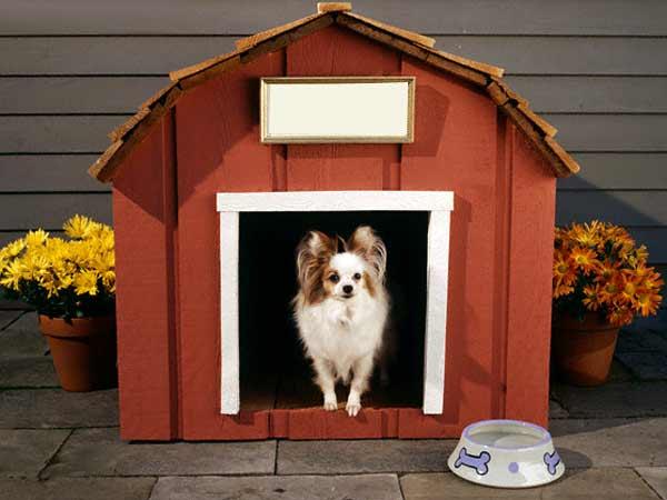 இது என் வீடு  Dog-house