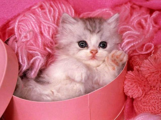 (صور قطط اتحداكم ماتعجبكم) Pink_cat_2