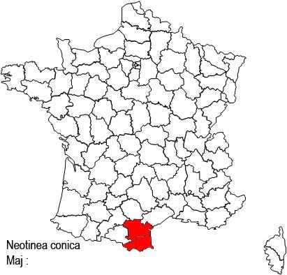 Neotinea conica ( Orchis conique ) Neo%20conica