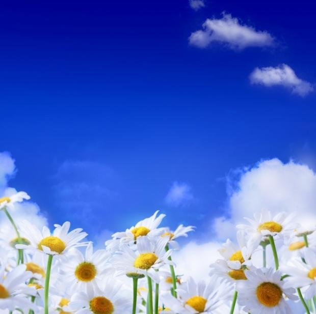 Spring மலர்கள்... Wonderful-Spring-Flowers-1
