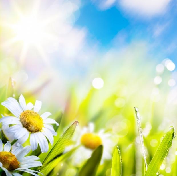 Spring மலர்கள்... Wonderful-Spring-Flowers-2