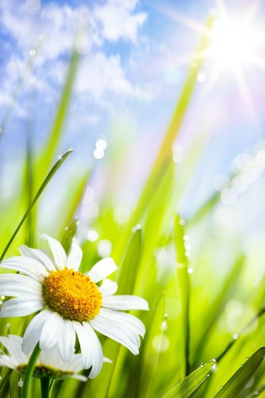 Spring மலர்கள்... Wonderful-Spring-Flowers-3