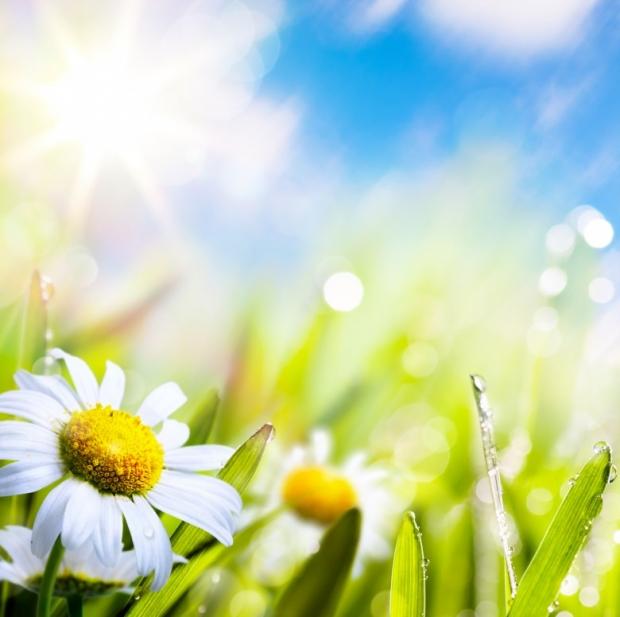Spring மலர்கள்... Wonderful-Spring-Flowers-4