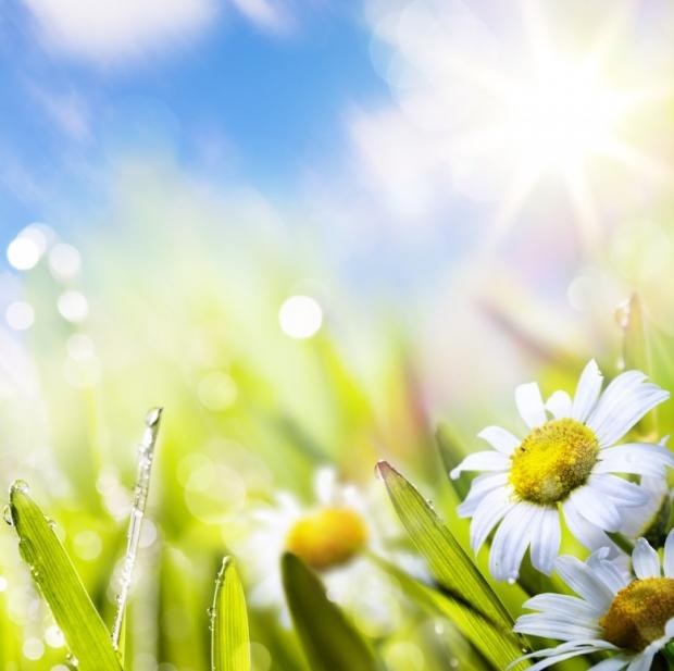 Spring மலர்கள்... Wonderful-Spring-Flowers-5
