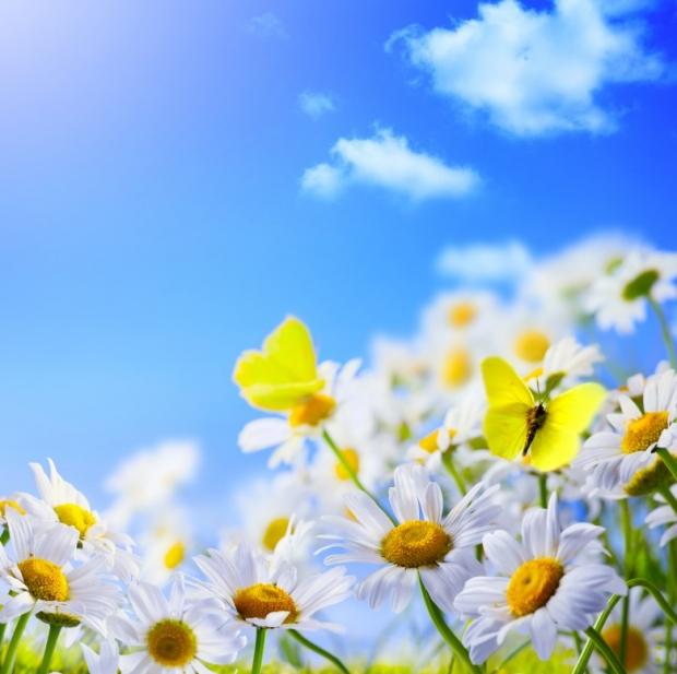 Spring மலர்கள்... Wonderful-Spring-Flowers-6