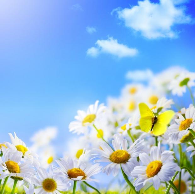 Spring மலர்கள்... Wonderful-Spring-Flowers