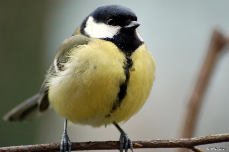 Lietderīga informācija par dzīvniekiem un putniem, online web kameras 4711614708_b