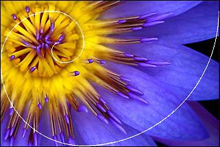 Assignment 21: Golden ratio/golden mean Flower
