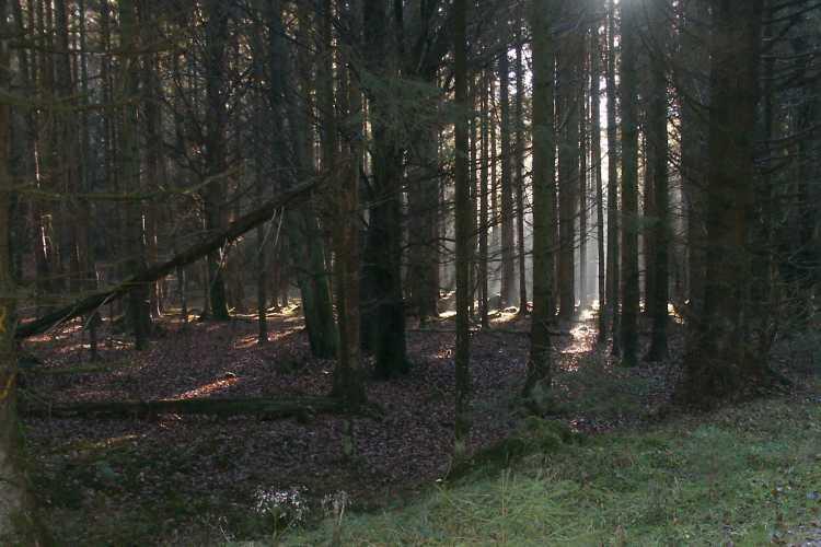 DinoWorld RPG Wald