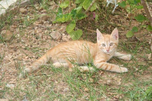 ο πορτοκαλουλης.... Nicky028