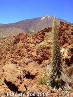TENERIFE - Teide patrimoine de l'UNESCO Unesco_teide