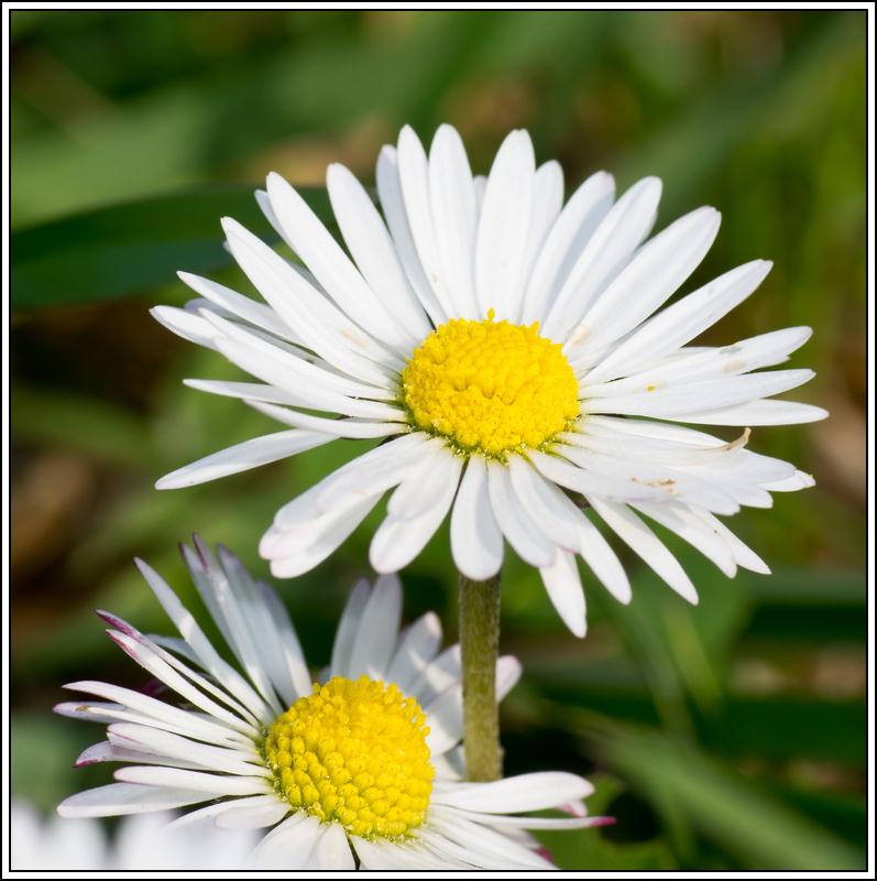 C'est le printemps, la saison des fleurs K5A15393