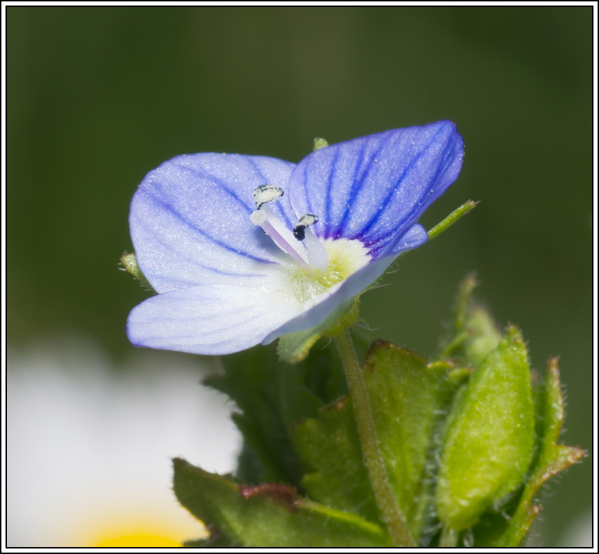 C'est le printemps, la saison des fleurs K5A15402